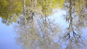 In lake water of river reflected trees in spring. In the lake water of the river reflected trees in spring, on the surface of the water reflected the trunks and stock footage