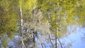 In lake water of river reflected trees in spring. In the lake water of the river reflected trees in spring, on the surface of the water reflected the trunks and stock video