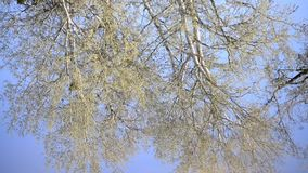 In lake water of river reflected trees in spring stock footage