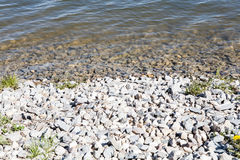Lake water stones sun and flowers Stock Photos