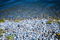 Lake water stones sun and flowers Stock Image