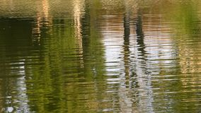 Lake Water Surface. And nature stock video footage