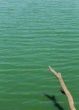 Lake water texture Royalty Free Stock Photo
