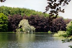 Lake weeping willow Park Tervuren, Brussels, Belgium. The lake with a weeping willow in park of Tervuren, Belgium with grass, water and trees on the edge of the stock image