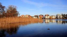 Lake Wetland  Sky reflection. Wild duck swimming in natural lake colorful reflection in Germany Stock Photos