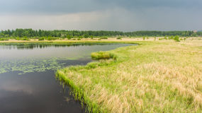 Lake and wetlands. A lake and grassy wetlands landscape in a rainy weather Royalty Free Stock Images