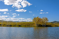 Lake and White Birch Royalty Free Stock Images