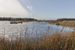 Lake wiith reeds. Royalty Free Stock Images