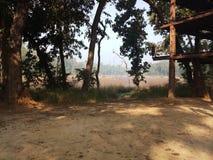 Lake wild in jungle chitwan national park stock photo