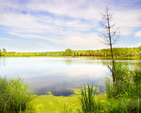 Lake in wild wood Stock Image