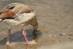 Lake wildlife. Lakeside views UK Royalty Free Stock Images