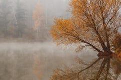 Lake willow reflection Stock Photos
