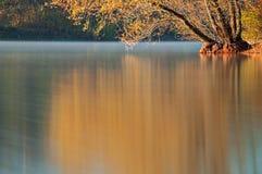 Lake willow reflection Stock Image