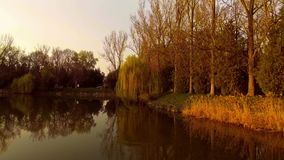 Lake with willow tree at sunset. Aerial shot lake with willow tree reflection at sunset stock footage