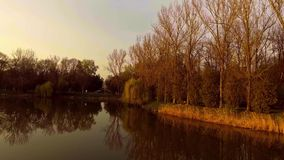 Lake with willow tree at sunset. Aerial shot lake with willow tree reflection at sunset stock video