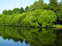 Lake and willow trees. Summer water landscape - part of lake, willow trees, reflection in water. Recorded in Izmaylovskiy park, Moscow Stock Photography