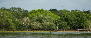Lake at Wilpattu National Park Stock Photos