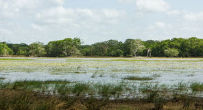 Lake at Wilpattu National Park Stock Image