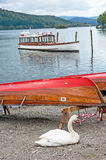 Lake Windermere, Cumberland. White swan resting next to an upturned rowing boat with tourist passenger craft on the lake and wooded slopes in the distance stock photos