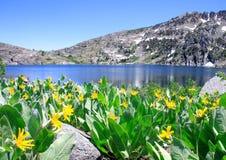 Lake Winnemucca. Beautiful Lake Winnemucca near Lake Tahoe, California, with wild Mule's Ear flowers in the foreground Stock Image