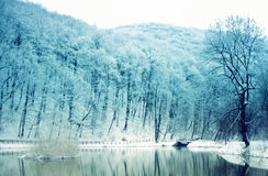 Lake in winter Stock Images