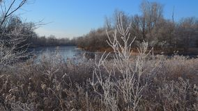 Lake, winter forest and dry grass in the frost. Early winter begins stock video footage