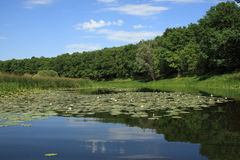 Lake in wood. Quiet lake in wood in a summer sunny day Stock Photos