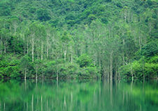 Lake with wood Royalty Free Stock Photography