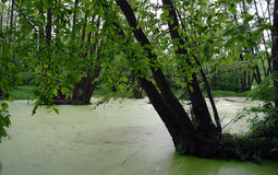 Lake in a wood. Royalty Free Stock Photography