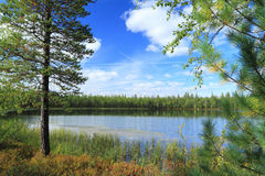 The lake in the wood Stock Images