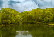 lake in a wood royalty free stock photo