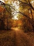 lake wood jesieni odbicia Obrazy Royalty Free