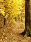 lake wood jesieni odbicia Zdjęcie Royalty Free