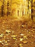 lake wood jesieni odbicia Obraz Stock