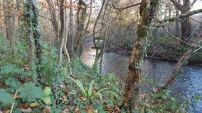 lake wood jesieni odbicia Fotografia Royalty Free