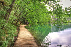 Lake and wood path Stock Image