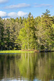 Lake in a woodland Stock Images