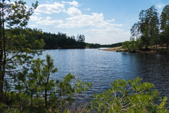 Lake of the Woods in Kurowski. Lake in the forest and wood in Kurowski royalty free stock photography