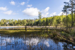 Lake in the woods Stock Photography