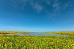 Lake with yellow flowers on the Dutch island Texel Stock Images