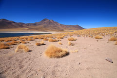 Lake and yellow grass under blue sky. Lake under blue sky, Chile Royalty Free Stock Photos