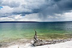 Lake Yellowstone on a Cloudy Day. This was Lake Yellowstone at Yellowstone National Park. The water was amazingly brilliant in color and I saw this dead tree Stock Photo