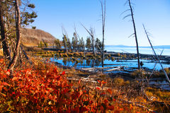 Lake Yellowstone Royalty Free Stock Photos