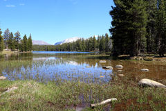 lake yosemite Arkivbild