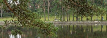 Lake, Zlatibor Serbia. Pine tree, Zlatibor Mountain in Serbia, artificial lake Royalty Free Stock Photography