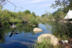 Lake at Zoo. Lake at the zoo in Albuquerque Stock Photo