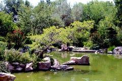 Lake at Zoo. A small lake at the Albuquerque zoo Stock Photo