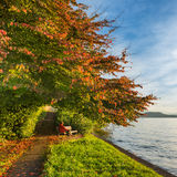 Lake Zug. On the shores of Lake Zug bench under a tree with bright red leaves. Evening autumn. In the background can be seen silhouettes of mountains Stock Photos