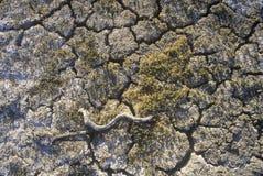 Lakebed seco, lago soda, California Foto de archivo libre de regalías
