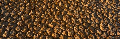 Lakebed seco, Nevada Fotos de archivo